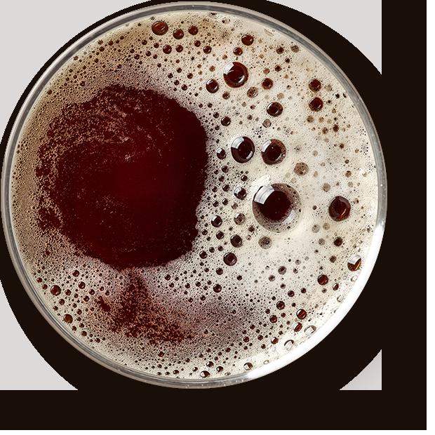 Terrabière - Carte bar - Bières